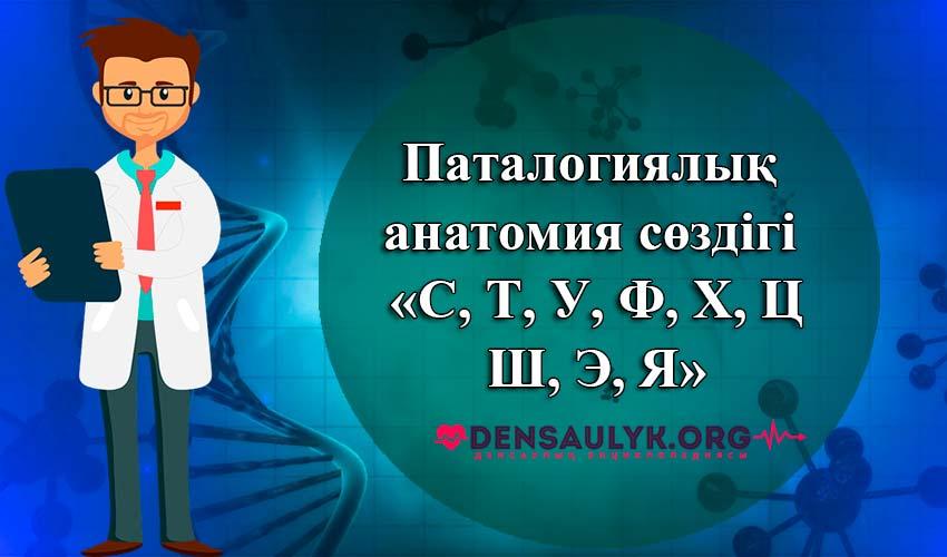 анатомия сөздігі
